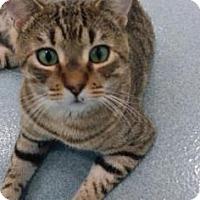 Adopt A Pet :: Julian - Belle Chasse, LA