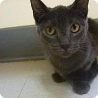 Adopt A Pet :: Mindy - Milwaukee, WI
