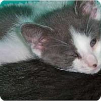 Adopt A Pet :: Keira - Secaucus, NJ