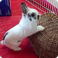 Adopt A Pet :: Buddy - Portland, ME