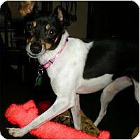 Adopt A Pet :: Spree - Oklahoma City, OK
