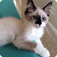 Adopt A Pet :: Sammie (Samatha) - Harrisburg, NC