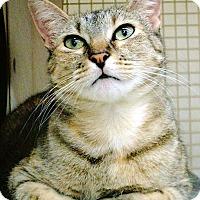 Adopt A Pet :: Ember - Naples, FL
