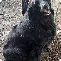 Adopt A Pet :: Princess - New Canaan, CT