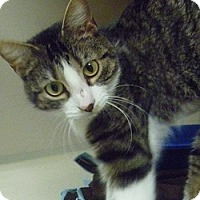 Adopt A Pet :: Mazie - Hamburg, NY