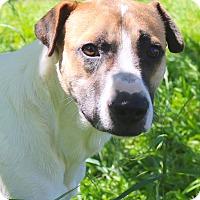 Adopt A Pet :: Seti - cupertino, CA