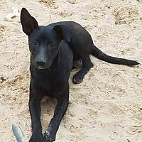 Adopt A Pet :: April - San Antonio, TX