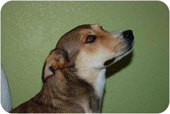 Basset Hound/German Shepherd Dog Mix Puppy for adoption in Alliance, Nebraska - Jesse