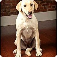 Adopt A Pet :: Lady - Owensboro, KY