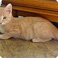 Adopt A Pet :: Abraham - Escondido, CA