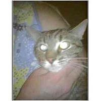 Adopt A Pet :: Winston - Owasso, OK