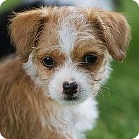 Adopt A Pet :: Pixie - Providence, RI