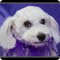 Adopt A Pet :: Katy - Fort Braff, CA