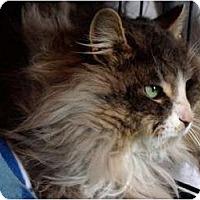 Adopt A Pet :: Benjamin - Markham, ON