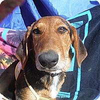 Adopt A Pet :: FANNY - Atascadero, CA