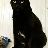 Adopt A Pet :: Sassy - Amarillo, TX