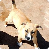 Adopt A Pet :: Baby Rainier - Oakley, CA