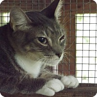 Adopt A Pet :: Tony Tiger - Floral City, FL