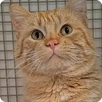 Adopt A Pet :: Kramer - Colfax, IA