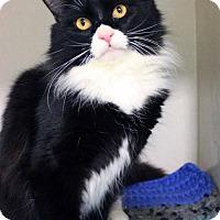 Adopt A Pet :: Bentley - Paris, ME