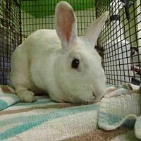 Adopt A Pet :: A1611326 - Los Angeles, CA