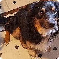 Adopt A Pet :: Duke - Providence, RI