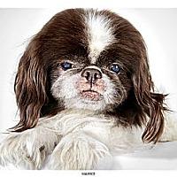 Adopt A Pet :: Maurice - New York, NY