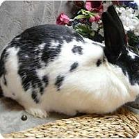 Adopt A Pet :: Rooney - Newport, DE