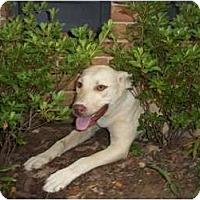 Adopt A Pet :: Shirley - Adamsville, TN