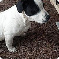 Adopt A Pet :: Nash - Woodlawn, TN