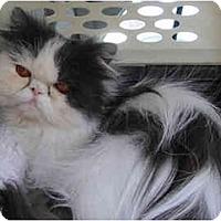 Adopt A Pet :: Jay-Z - Beverly Hills, CA