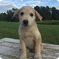Adopt A Pet :: Jagger - Russellville, KY