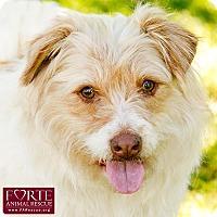Adopt A Pet :: Suzy - Marina del Rey, CA