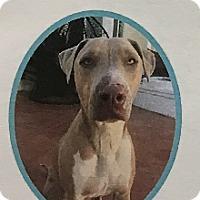Adopt A Pet :: Gio - Los Angeles, CA