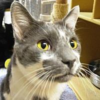 Adopt A Pet :: Dudley - Las Vegas, NV