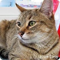 Adopt A Pet :: Gumdrop - Jackson, NJ