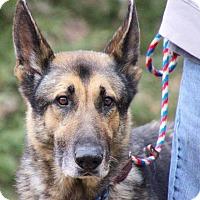 Adopt A Pet :: Asher - Coopersburg, PA