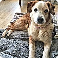 Adopt A Pet :: Mabel - Petersburg, VA
