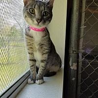 Adopt A Pet :: Emogene - Geneseo, IL