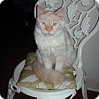Adopt A Pet :: Brandy - NEWCASTLE, CA