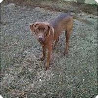 Adopt A Pet :: Logan - Cumming, GA