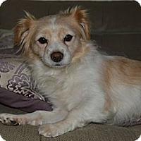 Adopt A Pet :: BB - Los Angeles, CA