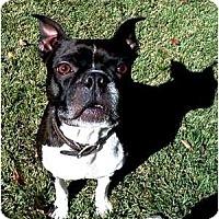 Adopt A Pet :: Ollie - Duluth, GA