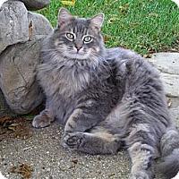 Adopt A Pet :: Johnny - Thousand Oaks, CA