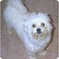 Adopt A Pet :: McGregor - dewey, AZ