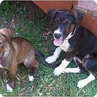 Adopt A Pet :: Louise - Ooltewah, TN