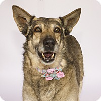 Adopt A Pet :: Dusty - Acton, CA