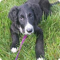 Adopt A Pet :: Henley - Plainfield, CT