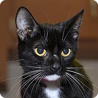 Adopt A Pet :: Rhianna - Medina, OH