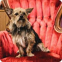 Adopt A Pet :: Samuel - Beloit, WI